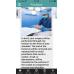 Reverse Total Shoulder Replacement - Patient Guide